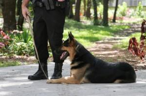 honden brigade
